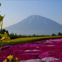Mr Mishima's amazing garden.