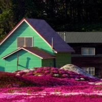A vibrant color blast from Mr Mishimas garden.