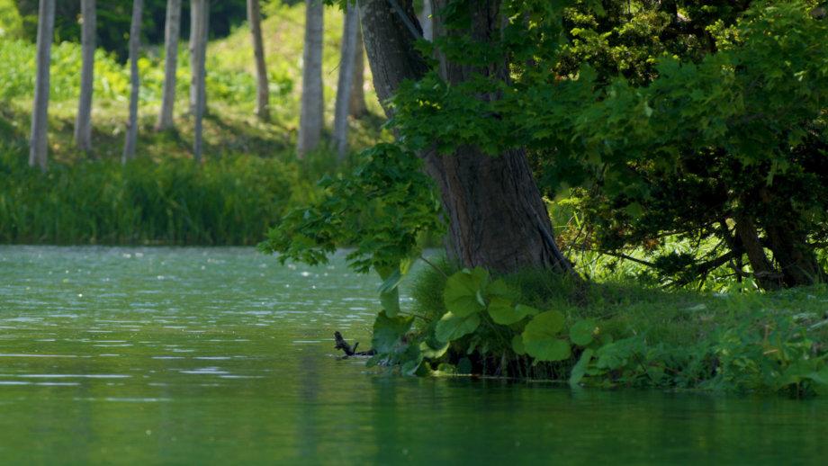 News 23 Summer 19 Water Clips 00 00 55 13 Still005